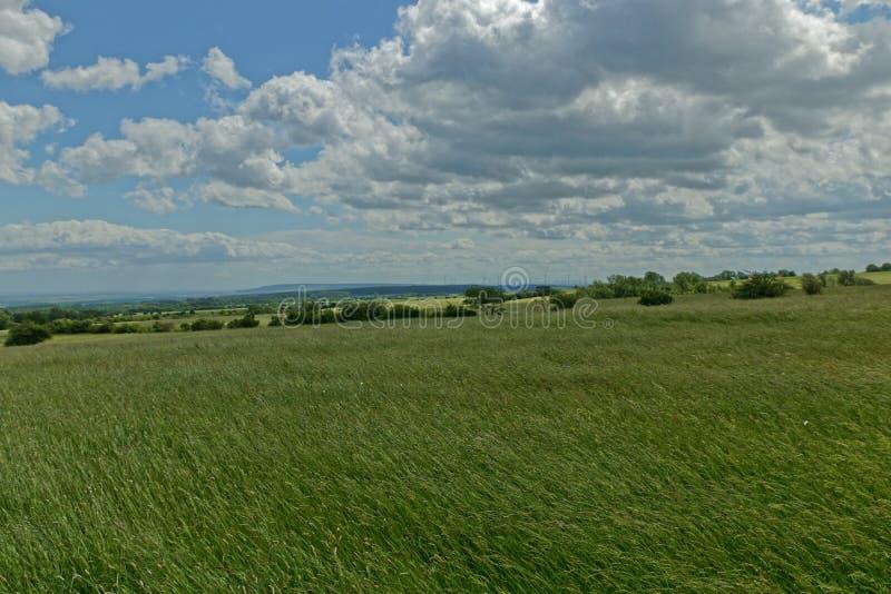Pascolo al bordo del parco nazionale di Hainich nella Turingia vicino a Craula immagini stock