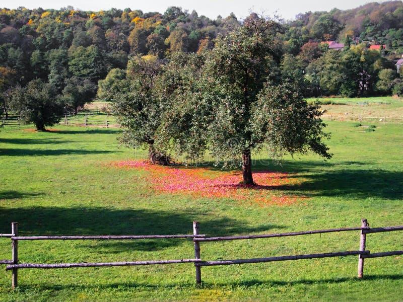 Pascolo con gli alberi da frutto fotografia stock libera da diritti