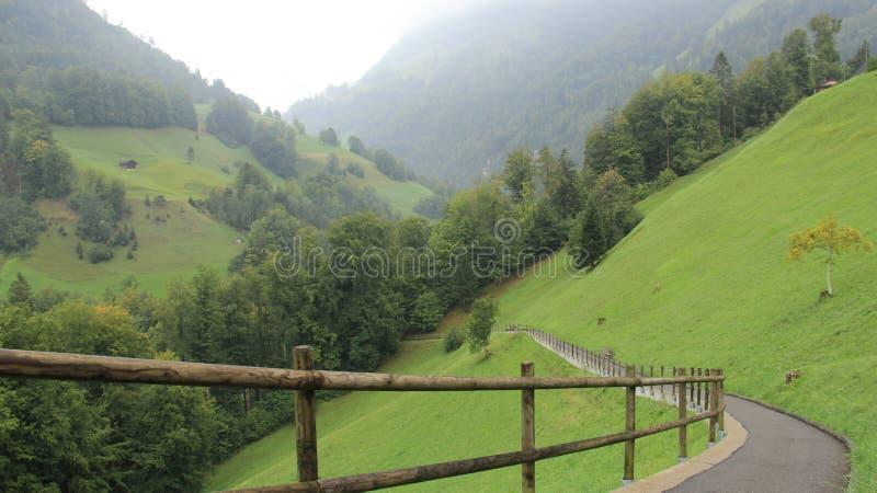 Pascolo con la via e la foresta verde fotografie stock