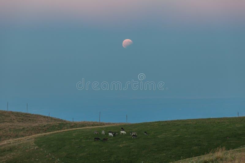 Pascolo degli asini nell'ambito di un'eclissi della luna immagini stock libere da diritti