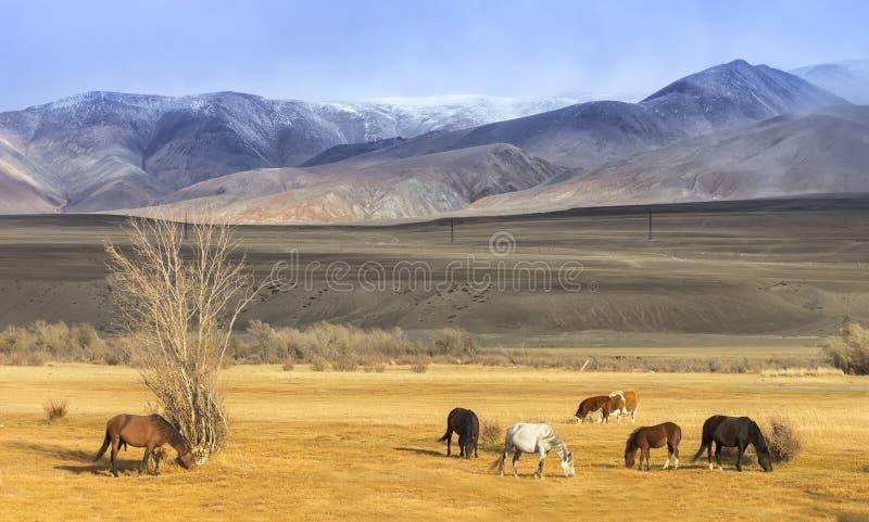 Pascolo dei cavalli al piede delle montagne immagini stock