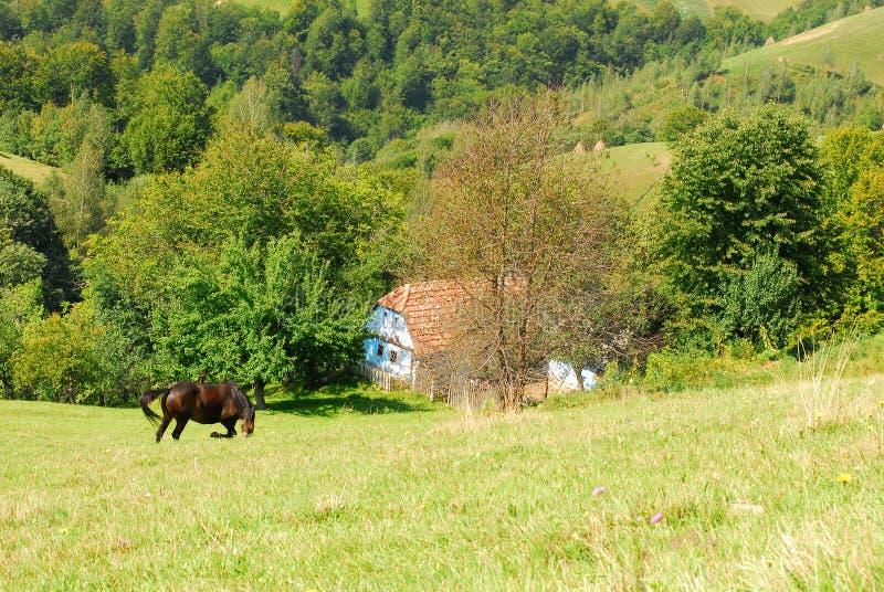 Pascolo del cavallo sulle belle colline verdi fotografia stock libera da diritti