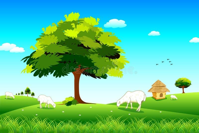 Pascolo delle pecore illustrazione vettoriale