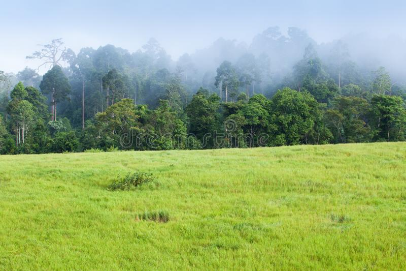Pascolo e foresta sempreverde della collina nella stagione delle pioggie fotografia stock libera da diritti