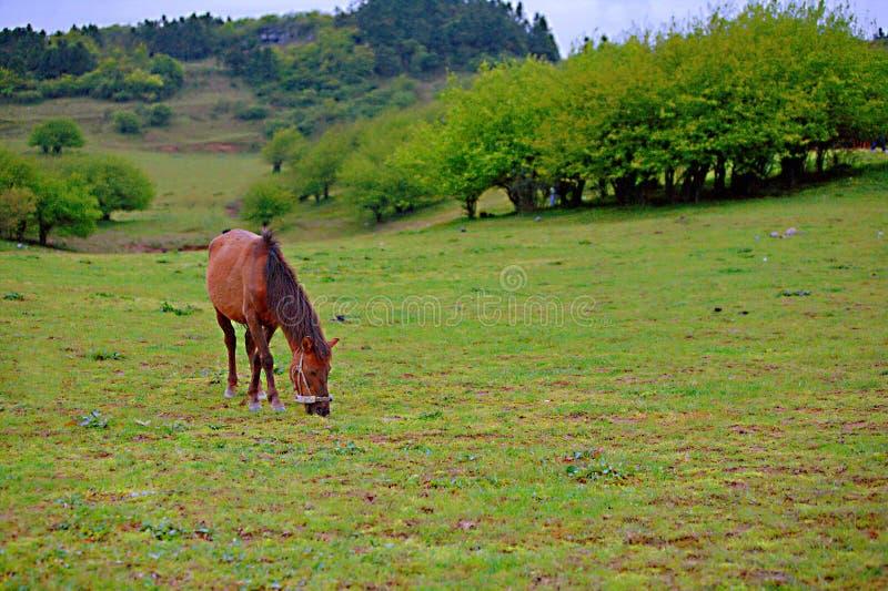 Pascolo leggiadramente della montagna di Wulong immagini stock