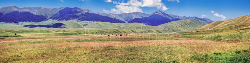 Pascolo sul plateau della montagna del Assy Regione del Kazakistan, Almaty immagine stock