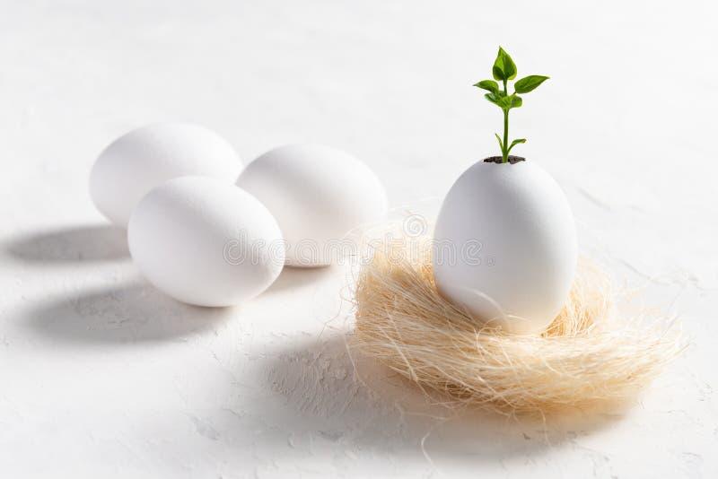 Pascua, nuevo concepto de la vida planta del almácigo en cáscara de huevo en tarjeta de la primavera de la jerarquía foto de archivo