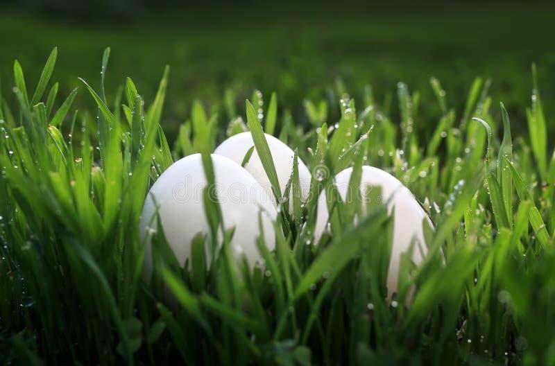 Pasen-achtergrond die met drie witte kippeneieren in gre liggen royalty-vrije stock fotografie