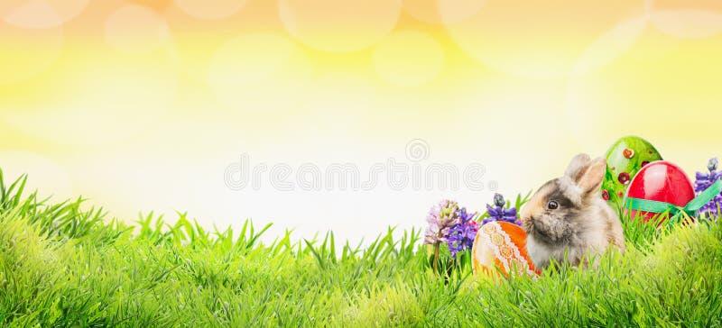 Pasen-achtergrond met konijntje, eieren en bloemen op gras en zonnige hemel met bokeh, banner