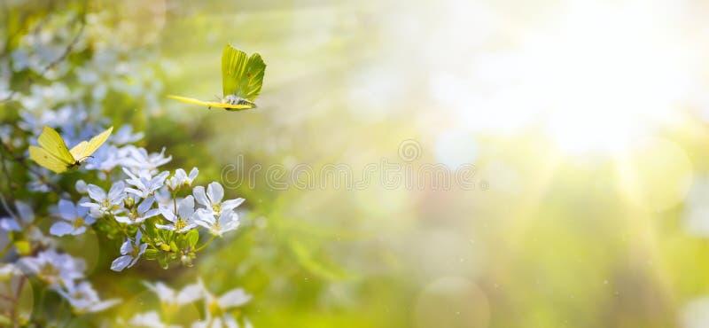 Pasen-de achtergrond van de de lentebloem; bloem en gele vlinder royalty-vrije stock afbeeldingen