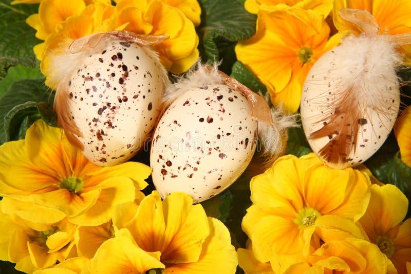 Pasen gekleurde eieren en gele bloemen royalty-vrije stock foto