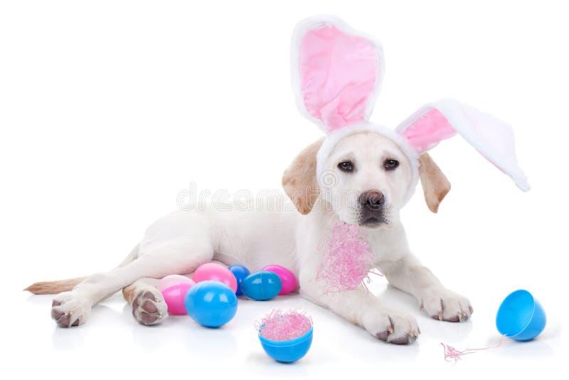 Pasen-Hond royalty-vrije stock foto