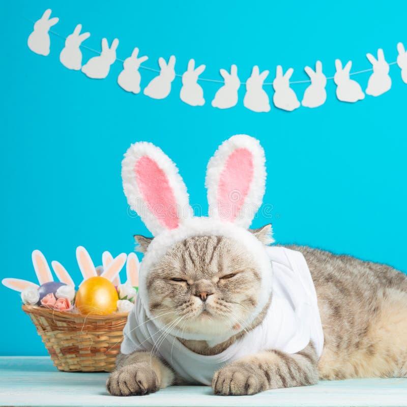 Pasen-kat met konijntjesoren met paaseieren Leuk katje royalty-vrije stock foto's