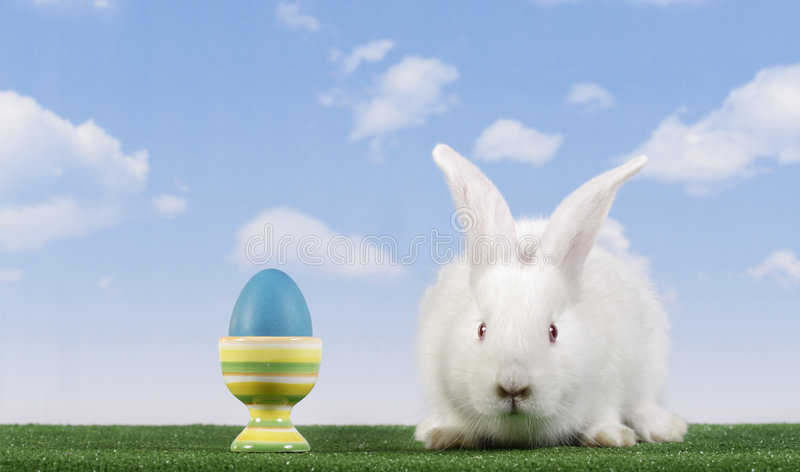 Pasen-konijn royalty-vrije stock afbeeldingen