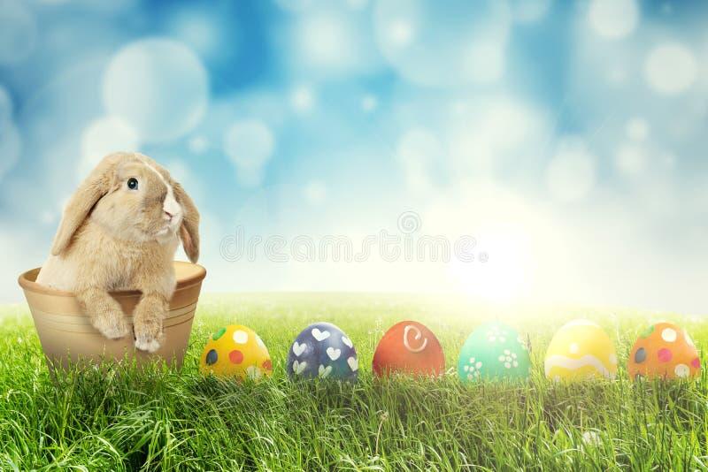 Pasen-konijn met paaseieren op gras stock fotografie