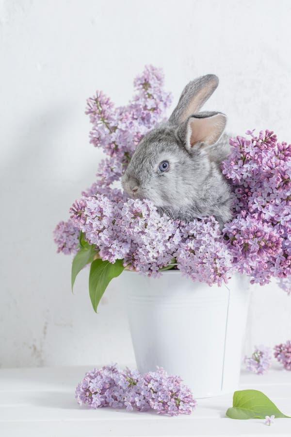 Pasen-konijn met sering in vaas royalty-vrije stock afbeelding