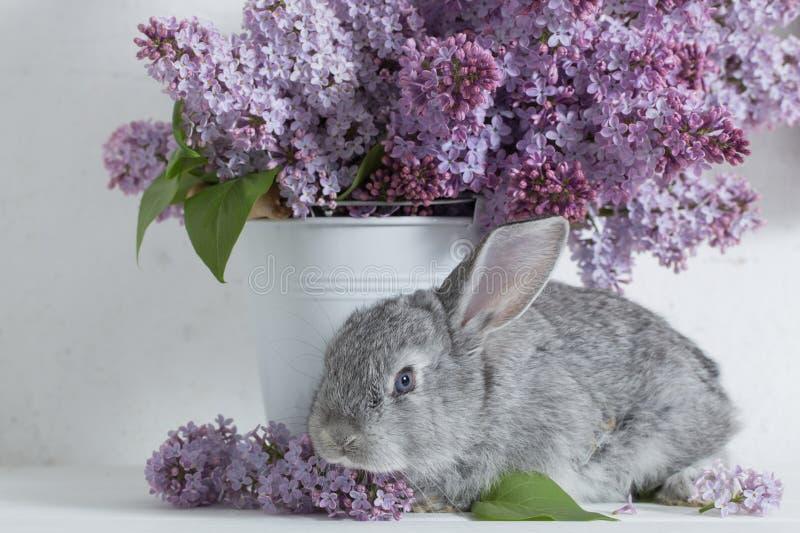 Pasen-konijn met sering in vaas stock afbeeldingen