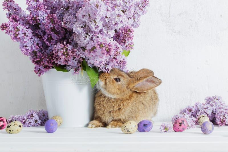 Pasen-konijn met sering in vaas stock fotografie