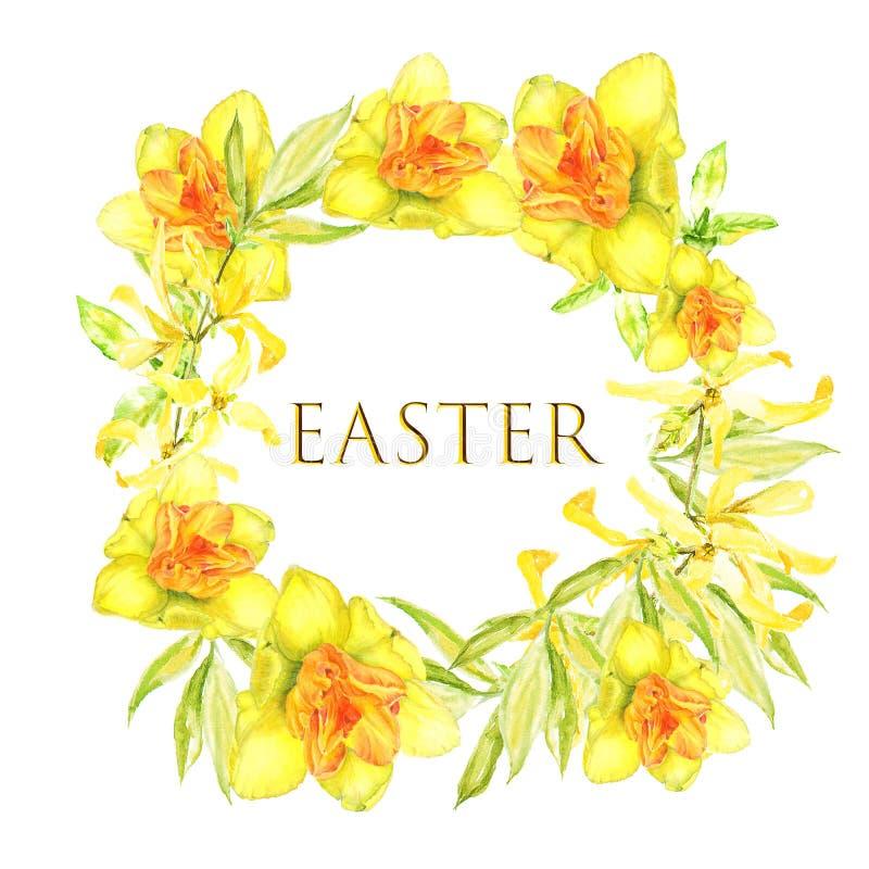 Pasen-kroon met gele forsythia en gele narcissen Vierkante grens Waterverfillustratie op witte achtergrond royalty-vrije illustratie