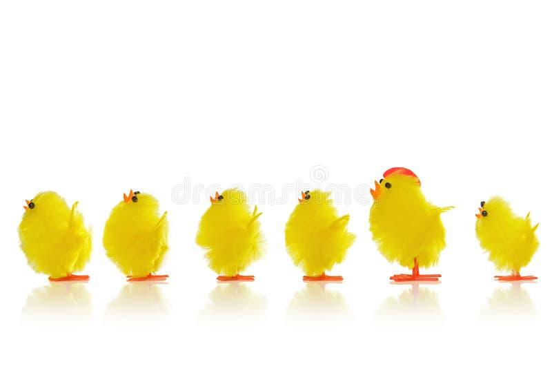 Pasen-kuikens in een lijn stock afbeeldingen