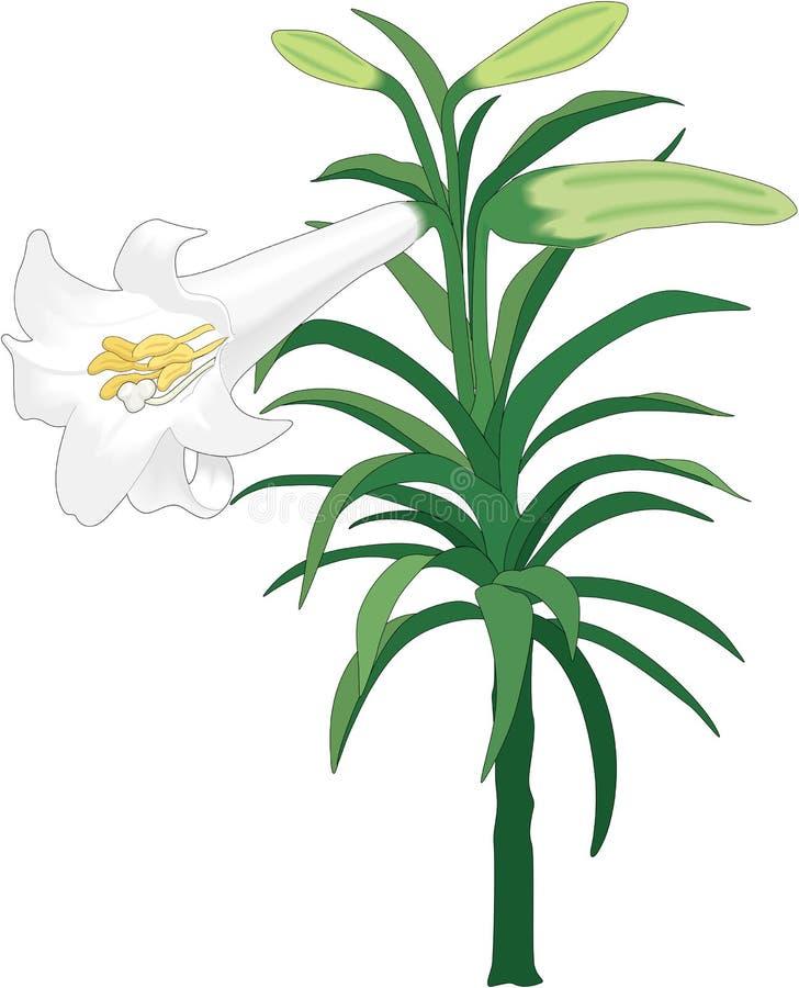 Pasen Lily Vector Illustration vector illustratie