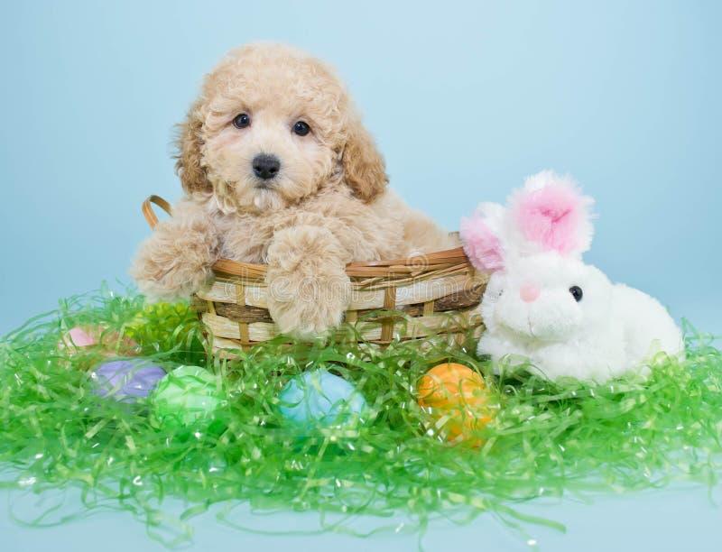Pasen-Puppy royalty-vrije stock fotografie
