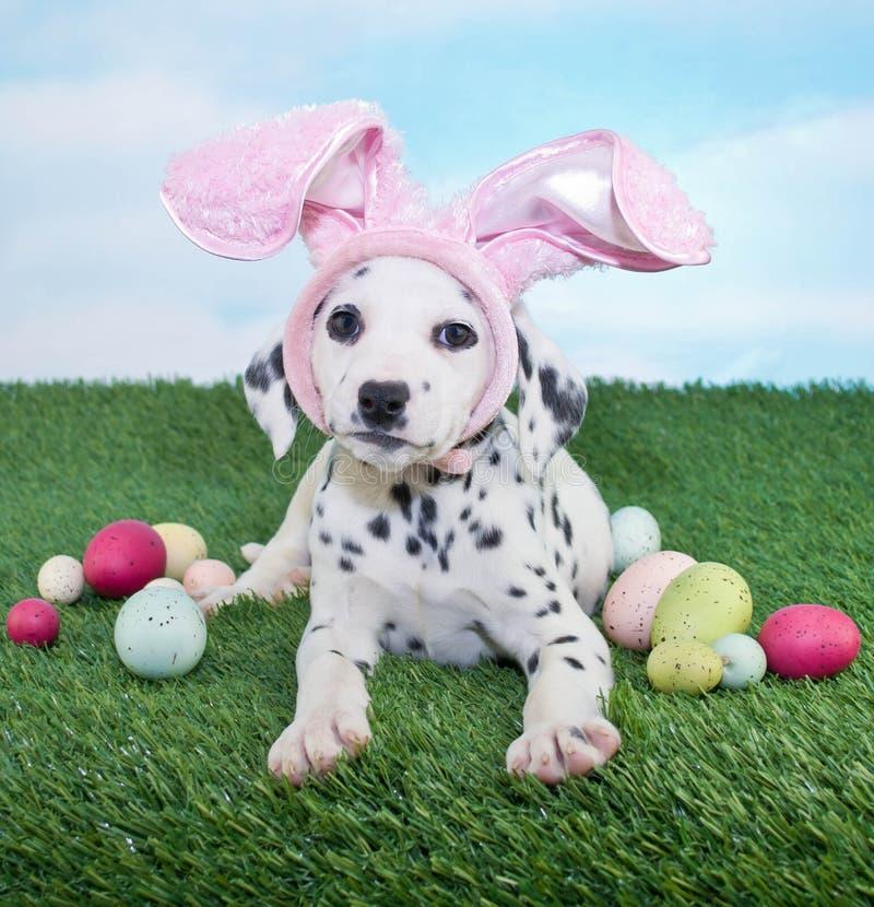 Pasen-Puppy stock afbeeldingen