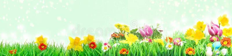 Pasen-weide, bloemweide met tulpen, gele narcissen stock afbeeldingen