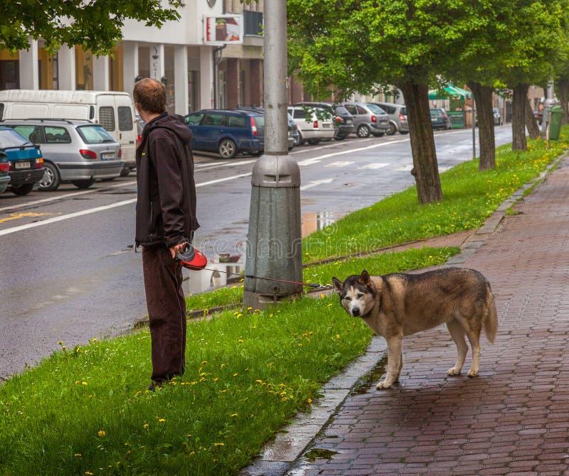 Paseo con su mejor amigo En las calles de la ciudad vieja de Munich imagen de archivo