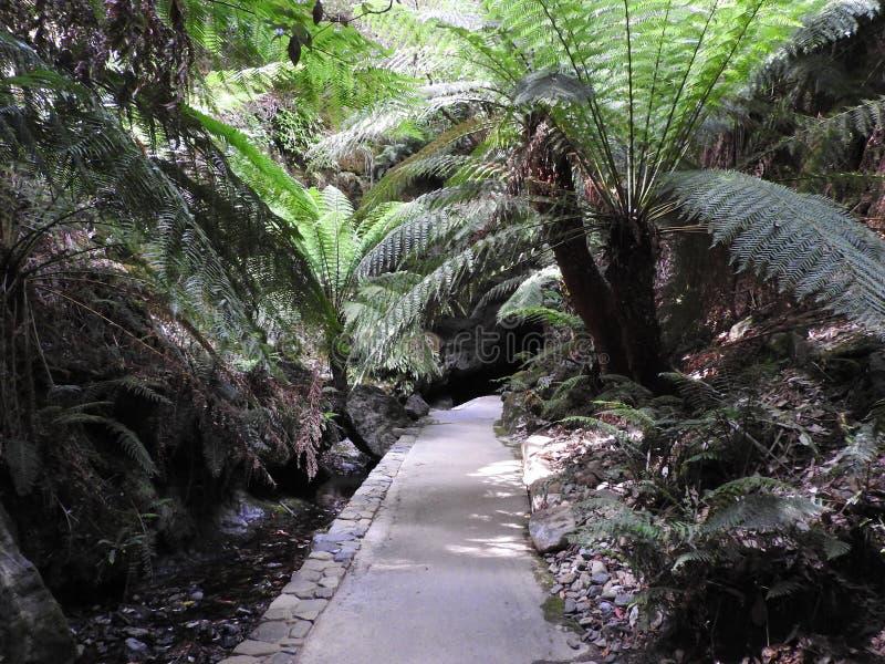 Paseo de Fernglade de la cueva de Marakoopa, Tasmania imagenes de archivo