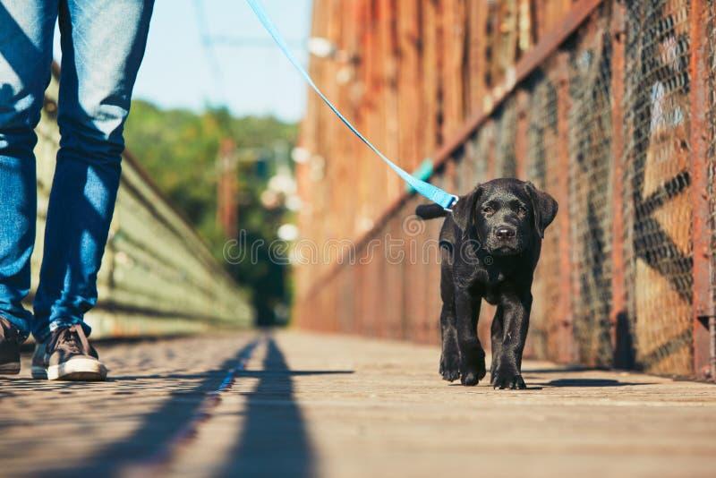 Paseo de la mañana con el perro fotos de archivo libres de regalías