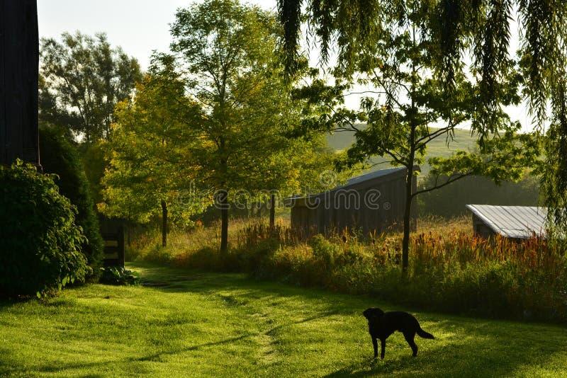 Paseo de la mañana en la granja imagenes de archivo