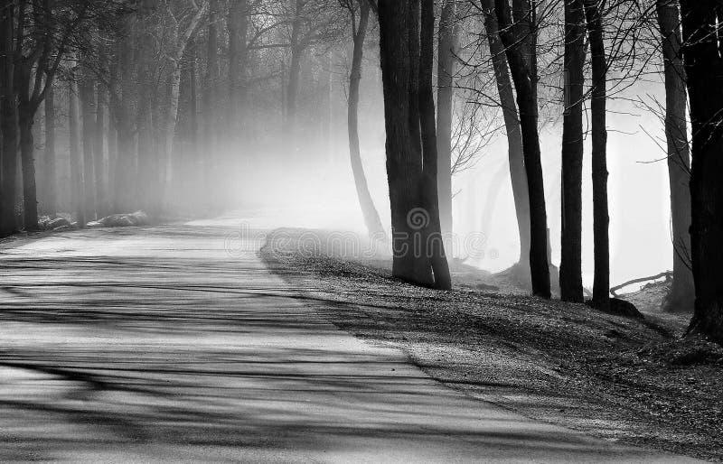 Paseo de la mañana en la niebla fotografía de archivo