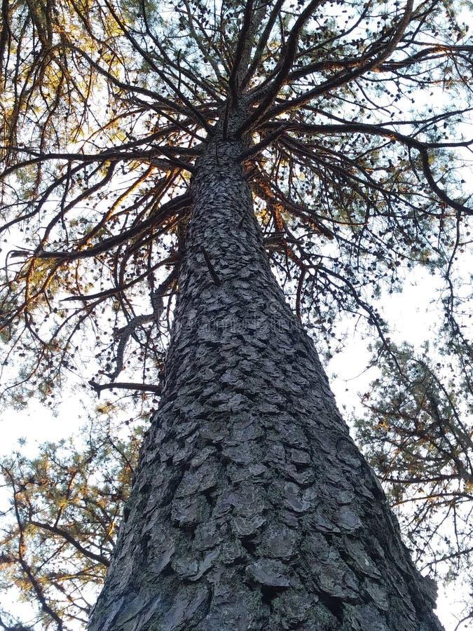 Paseo de la naturaleza en el bosque fotos de archivo libres de regalías