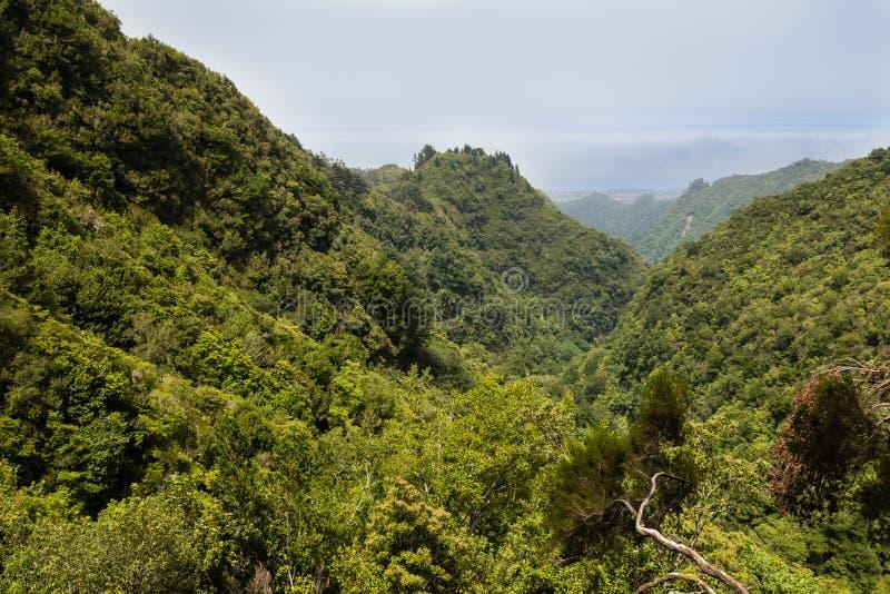 Paseo de Levada en la isla de Madeira imagen de archivo