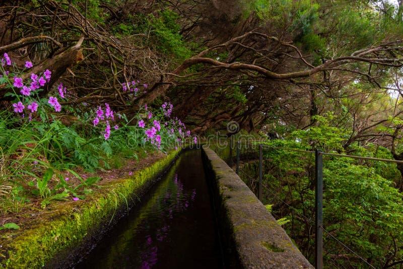 Paseo de Levada en la isla de Madeira, Portugal, Europa fotos de archivo