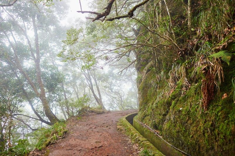Paseo de Levada a través del bosque del laurel en la isla de Madeira, Portugal fotos de archivo libres de regalías