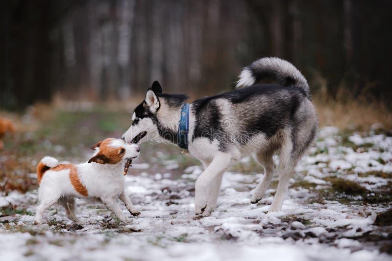 Paseo de los perros en el parque en invierno fotos de archivo