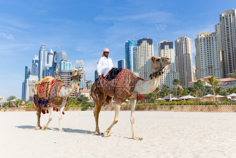 Paseo de ofrecimiento del camello del hombre en la playa de Jumeirah, Dubai, United Arab Emirates fotos de archivo