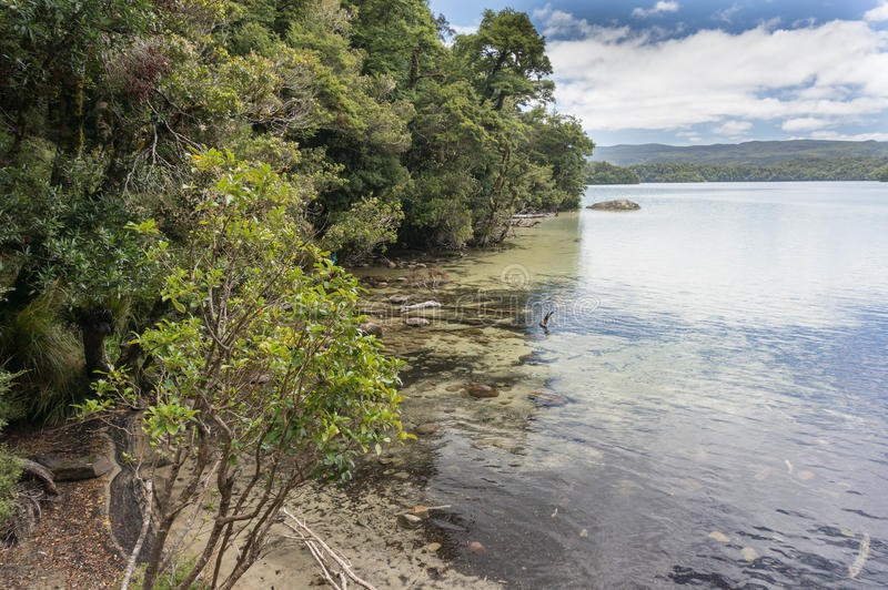 Paseo de Waikareiti del lago Te Urewera National Park fotografía de archivo libre de regalías