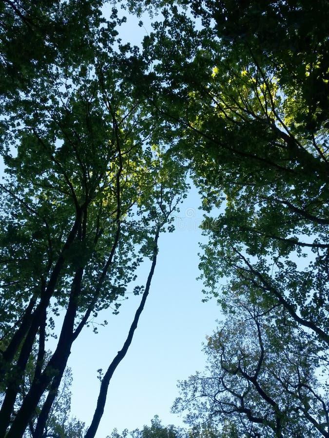 Paseo del bosque del verano por la tarde con la luz del sol pasada foto de archivo libre de regalías