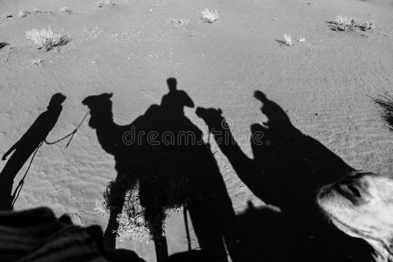 Paseo del camello de Dromedar en el desierto imagen de archivo
