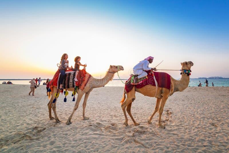 Paseo del camello en la playa en el puerto deportivo de Dubai fotografía de archivo