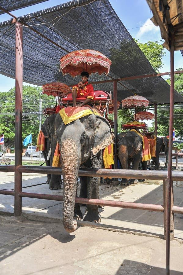 Paseo del elefante imagen de archivo libre de regalías