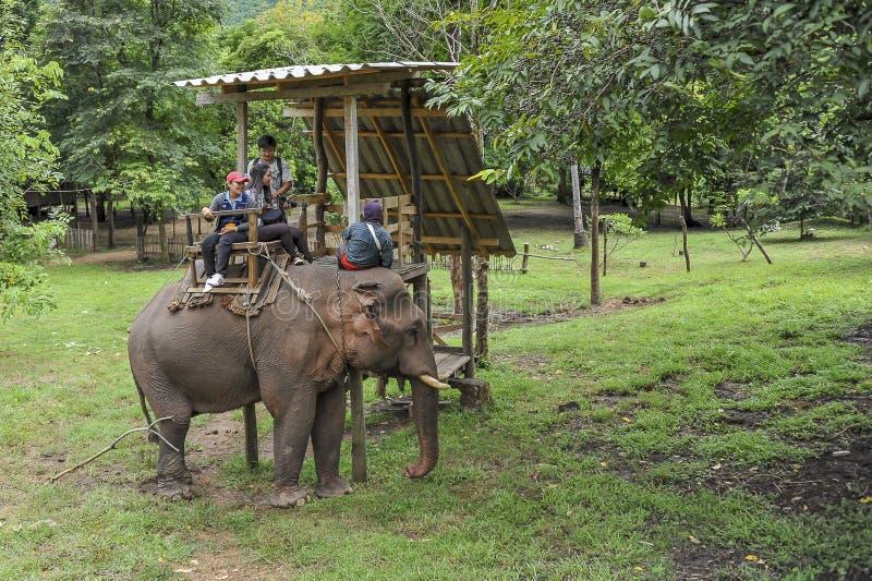 Paseo del elefante fotografía de archivo