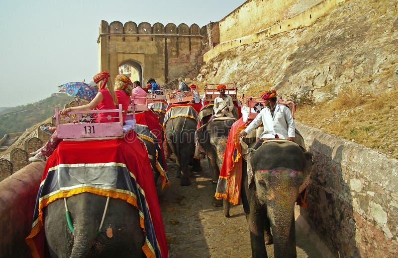 Paseo del elefante en el fuerte ambarino, Rajasthán fotos de archivo