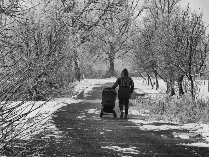 Paseo del invierno con el cochecito debajo de árboles nevosos en la trayectoria hivernal fotografía de archivo