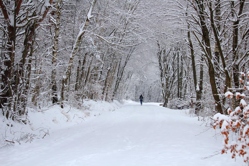 Paseo del invierno del paisaje del bosque Nevado fotografía de archivo