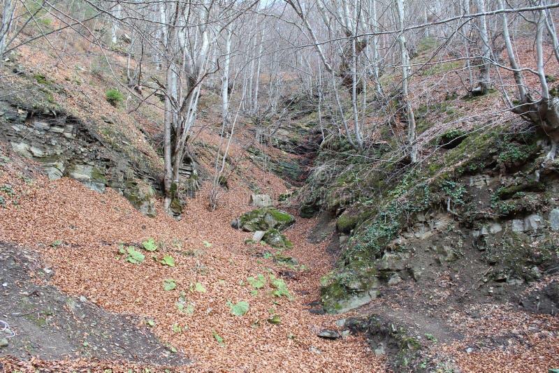 Paseo del otoño en la montaña fotos de archivo