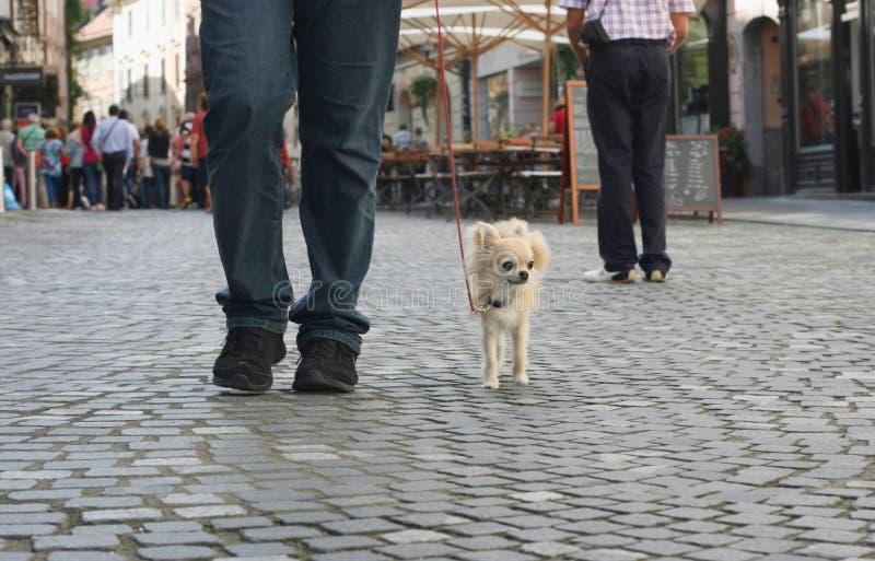 Paseo del perro de la ciudad fotos de archivo libres de regalías